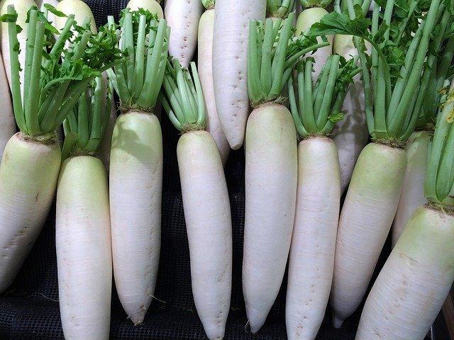 japanese-white-radish-gc83f733ef_640